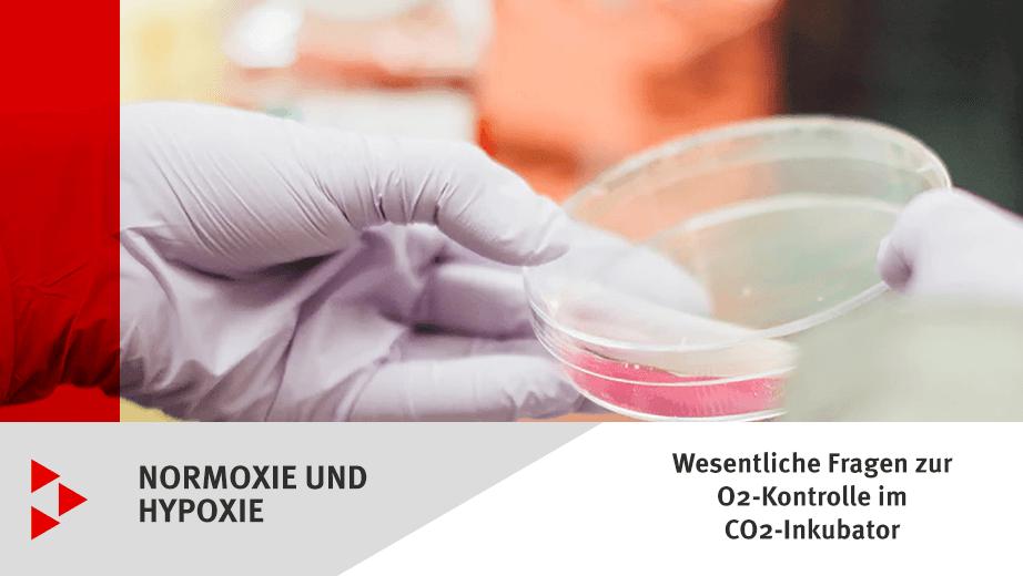 Normoxie und Hypoxie